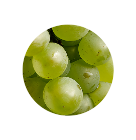pinot-blanc.png